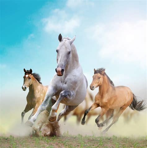 horses three facts western logan