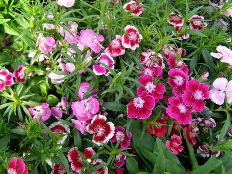 what plants are annuals window box garden space gardening space gardening
