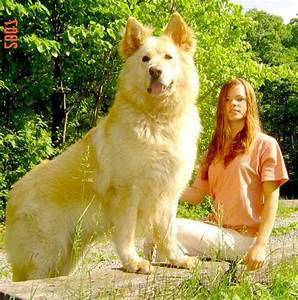 BIGGEST dogs of the world   Ecofren Your Say