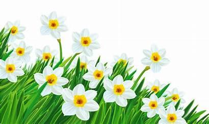 Clipart Daffodil Clipground