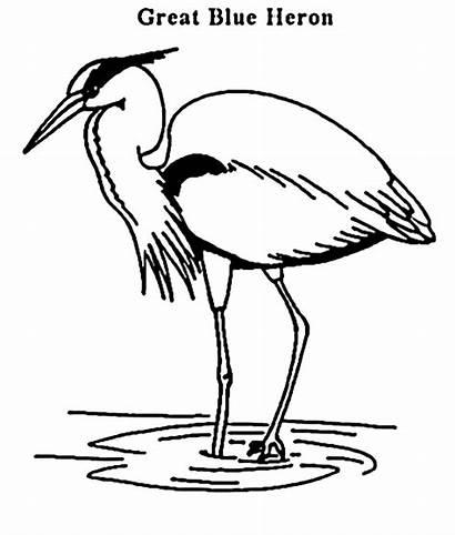 Heron Coloring Pages Animals Herron Sheets Animal