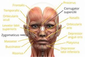 Facial Expression Pictures Chart  U0026 Facial Movements