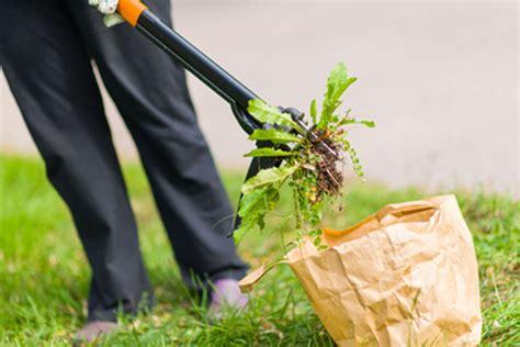 comment arracher les mauvaises herbes enlever les mauvaises herbes sans malmener votre dos et la plan 232 te fiskars