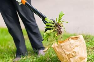 Comment Enlever Les Mauvaises Herbes : enlever les mauvaises herbes sans malmener votre dos et ~ Melissatoandfro.com Idées de Décoration