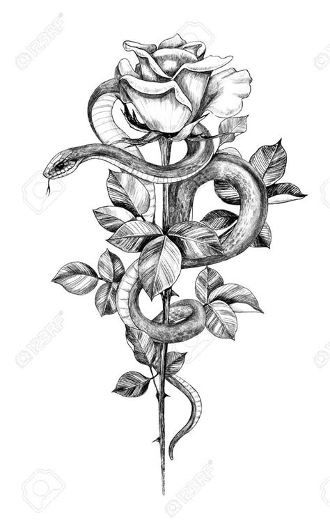 Hand drawn twisted Snake with rose on high stem isolated on white. Pencil drawing monochrome