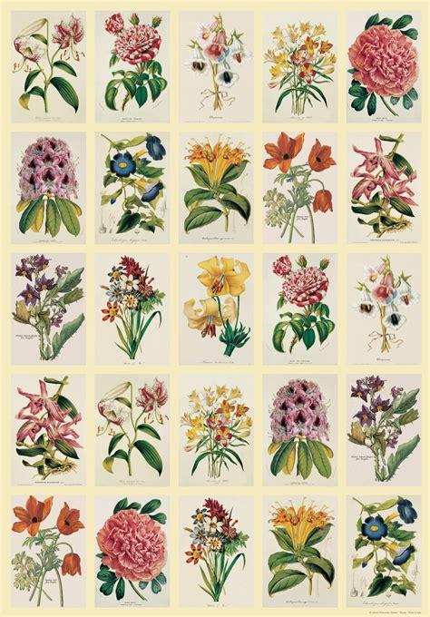 vintage art vintage art posters  botanica