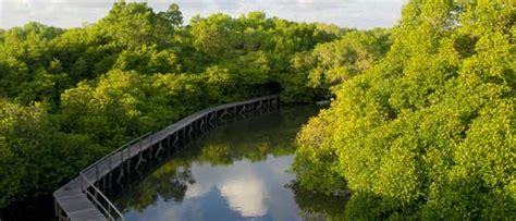 hutan mangrove bali wisata hutan bakau biaya tiket