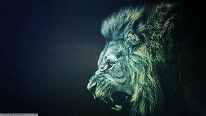 Lion Wallpapers Iphone 1080p
