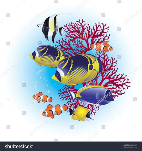 Colorful Tropical Fish On Coral Reef Stock Vector 84465583