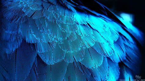 Many Types Of Feathers Make A Bird