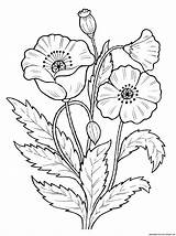 Coloring Poppy Popular Flowers sketch template