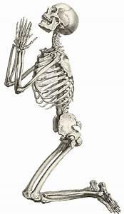 Human clipart human skeleton - Clipartix