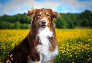 Welche Pflanzen Sind Für Hunde Giftig : giftige pflanzen f r unsere hunde deine tiere ~ Watch28wear.com Haus und Dekorationen