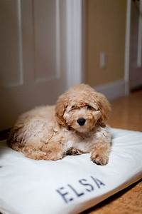 17 best ideas about dog bed covers on pinterest puppy With tough dog bed covers