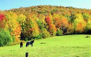 Kostenlose Bilder Herbst : fotos herbst ~ Yasmunasinghe.com Haus und Dekorationen
