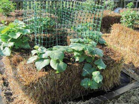 straw bale gardening fertilizer how to make a self fertilizing hay bale garden bed