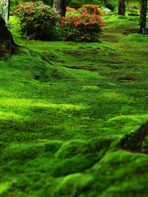 moss garden japan 54 best growing moss indoors and out images on pinterest moss garden gardening and