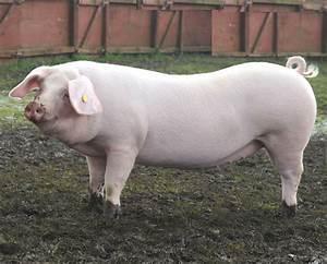 2018 Pig Farming Business Plan In Nigeria Pdf