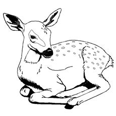 top   printable wild animals coloring pages