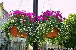 Blumen In Der Box : h ngende blumen auf einer stra e der stadt lemberg ukraine stockfoto colourbox ~ Orissabook.com Haus und Dekorationen