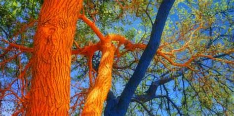 bright painting ideas  decorating trees creative