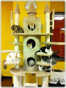 cat castle 1000 images about cat trees for vertical spacing on