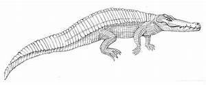 Diagram Of Crocodiles Body Parts Sketch Coloring Page