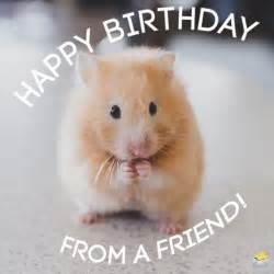 Funny Happy Birthday Cute Animals
