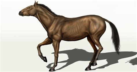 equus horse extinct horses genus species oregon age ice wikipedia file fossils wiki lived researchers humans place legged stout among