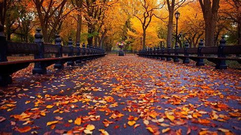 aesthetic autumn wallpapers