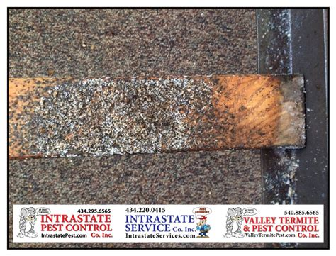 get help with bed bugs valley termite and pest co