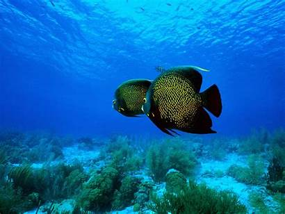 Fishes Tropical Wallpapers Fun Votes