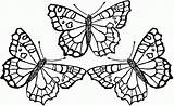 Coloring Butterfly Pages Cute Adults Popular sketch template