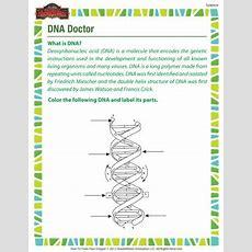 Dna Doctor  Free Dna Worksheet For 7th Grade Kids