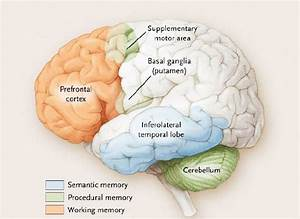Memory Systems And Parts Of The Brain  Budson And Price