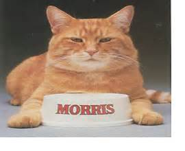 morris the cat morris the cat one finicky feline pets families