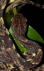 Slug Snake Eggs