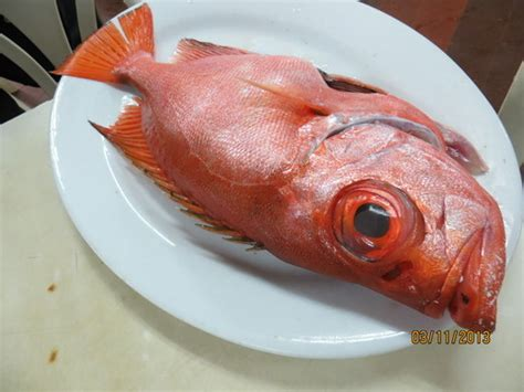 best fish to eat best fish to eat restaurants fish chowhound