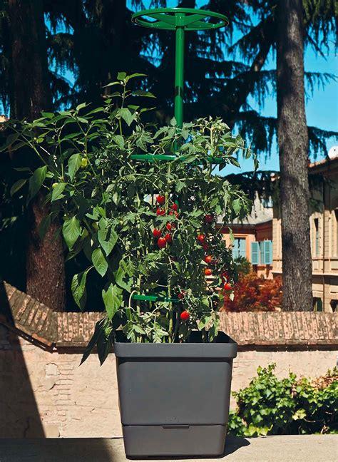 schwarz 228 ugige susanne 252 berwintern schwarz ugige susanne richtig berwintern ist die pflanze