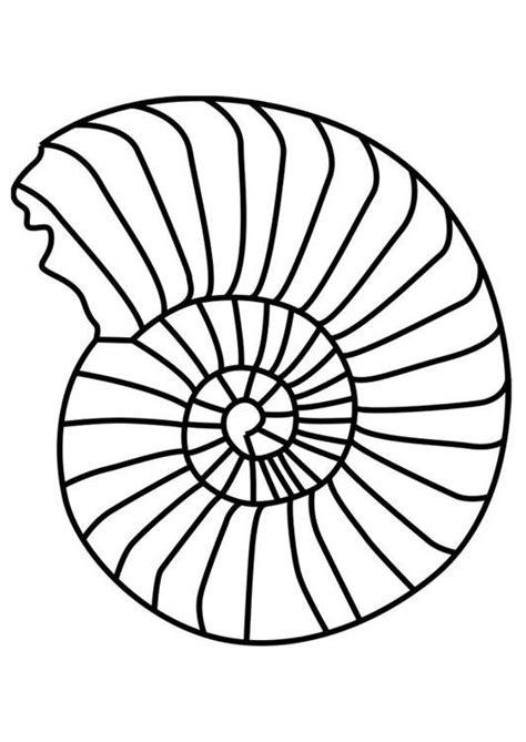coloriage mollusque ammonite img