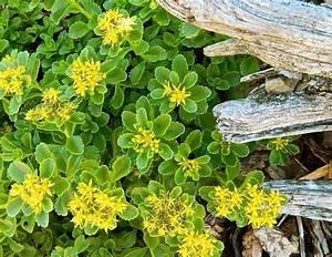 Blühende Kletterpflanzen Winterhart Mehrjährig : bodendecker f r fantastische gartengestaltung freshouse ~ Michelbontemps.com Haus und Dekorationen