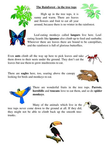 rainforest information cards and handouts science