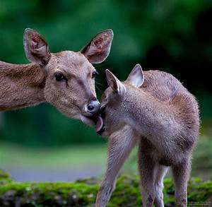 Animal Planet, part 39 | Animals