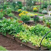 Fall Vegetable Gardening