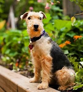 Fun Names For British And Irish Dog Breeds