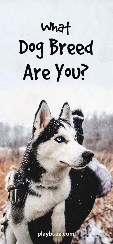 dog breed   puppies dog quizzes dog breed