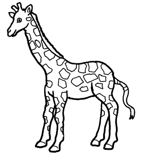 giraffe coloring page  clinicals pinterest animales