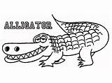 Alligator Coloring Pages Printable Cute Crocodile Drawing Outline Alligators Cartoon American Animal Getdrawings Line Insider Drawings Getcoloringpages Letter Scientific Getcolorings sketch template