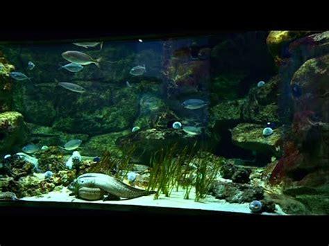 aquarium du trocadero tarifs aquarium du trocad 233 ro l un des plus beaux de