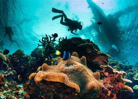 places  scuba dive  florida key largo miami